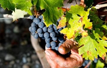Le Médoc : entre vignobles et estuaire